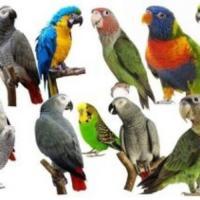 Clasificados florida Venta de  Aves y Animales exóticos
