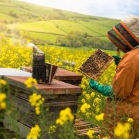 Rocky Mountain Beekeepers