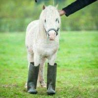 Anything Horse & Pony For Sale U.S.A.