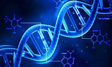 DNA (7)