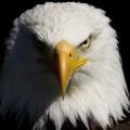 america o akbar